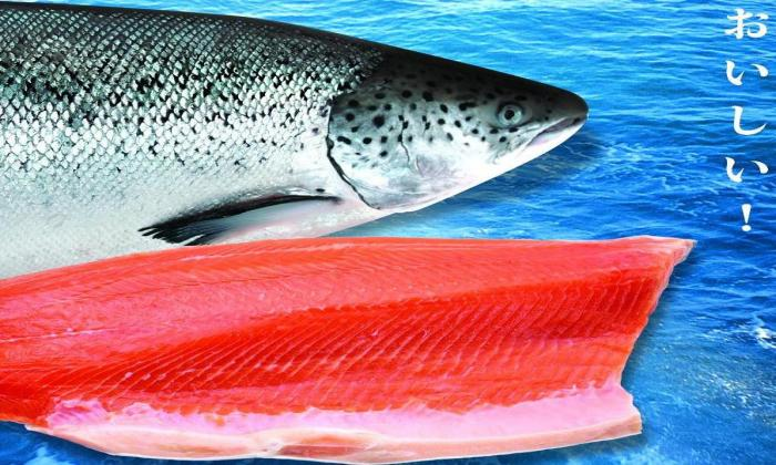 SALMON PRODUCT